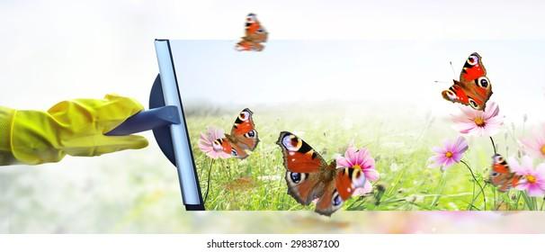 butterflies flitting about
