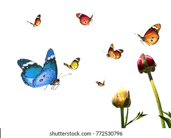 Butterflies fly over colorful flowers. Fantasy nature world. Minimalist image. Isolated on white