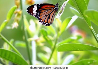 butterflies garden in kerla