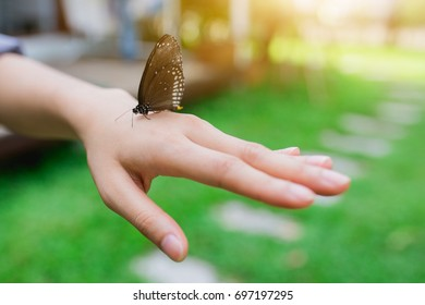Butterflies in the hands of women.