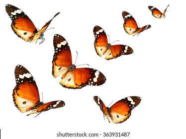 Mariposas Volando Stock Photos Images Photography Shutterstock