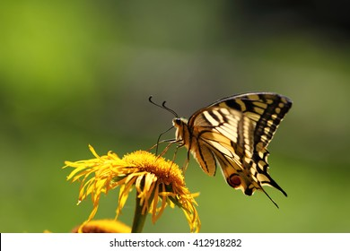 butterflies on flowers, with beautiful bokeh. local focus