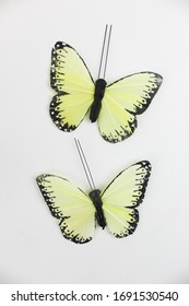 Butterflies on a White Background Isolated