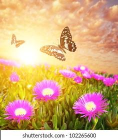 Butterflies over flower field.