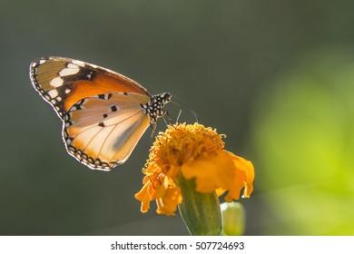 Butterflies Shine