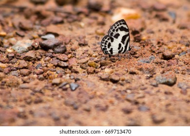 Butterflies and soil