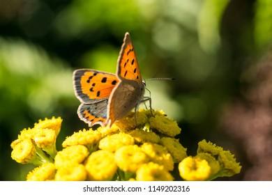 Butterflies in the summer sun.