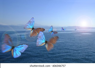 Butterflies in the swarm over a lake
