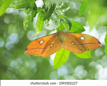 Butterflies of Thailand fly for pollination, spreading their wings beautifully on the tree bokae background