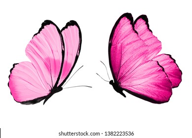 butterflies with wings color Deep pink. isolated on white background. tropical moths. template for design