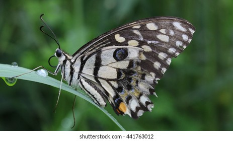 38fc52730728 Glassfish Stock Photo (Edit Now) 125254 - Shutterstock