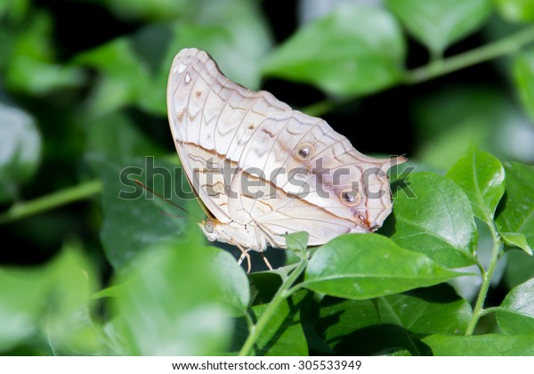 butterfly-600w-305533949.jpg