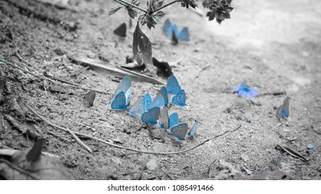 butterfly animal wildlife nature background