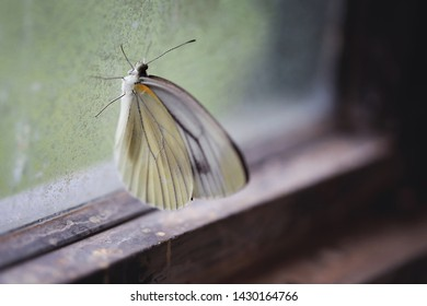 Butterfly attached to an old house window