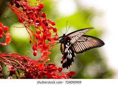 Butterfly Attracted to Beautiful Flowers, taken in Mawlyngan Meghalaya, the cleanest village in Asia in July 2017