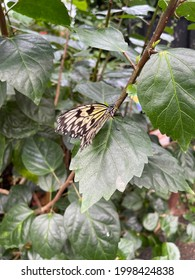 Butterfly  beautiful Romantic artistic image of living wildlife . animal friendly