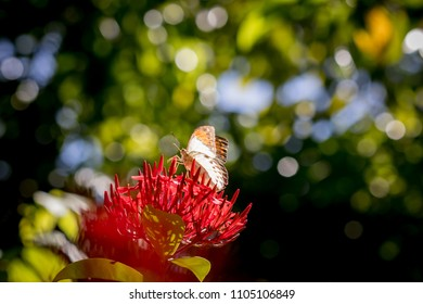 Butterfly with bokeh