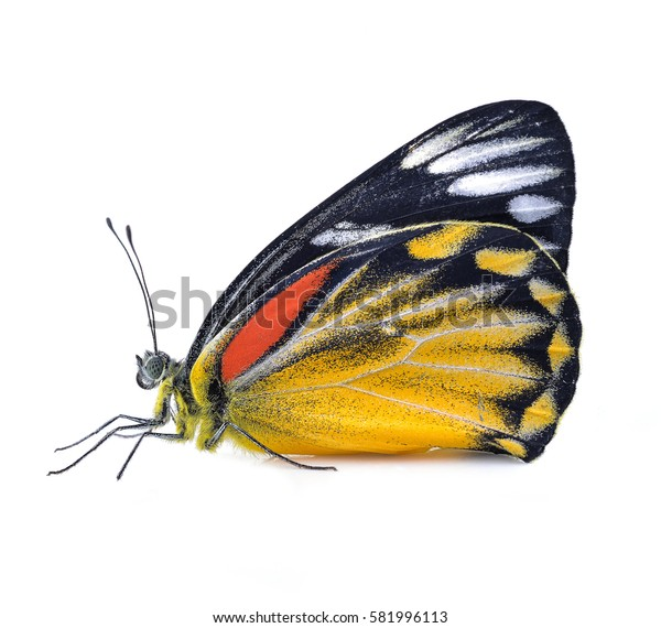 Butterfly with bright beauty isolated on white background.