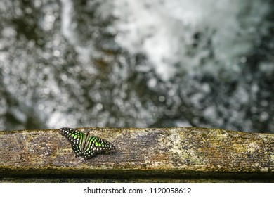 Butterfly by waterfall with copy space