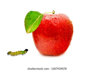 Butterfly caterpillars attacking apple. Isolated on a white background