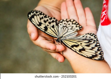 Butterfly in children's hands