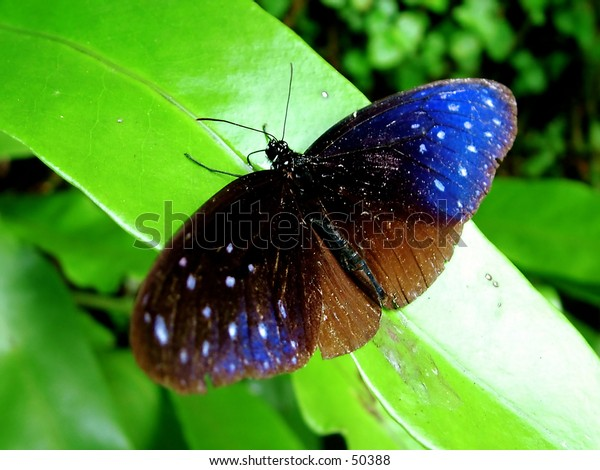 Butterfly - close up