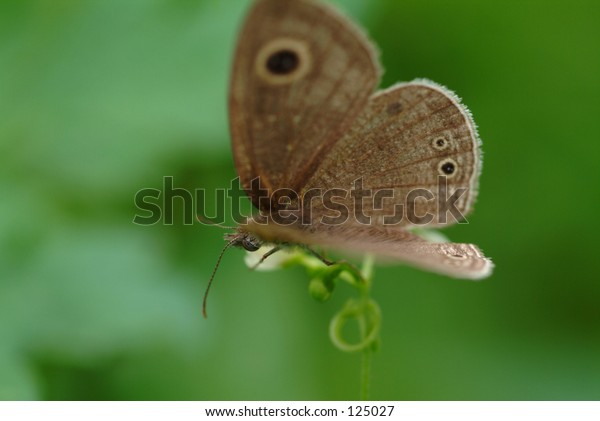 butterfly in closeup