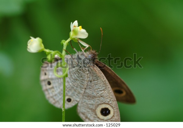 butterfly in closeup