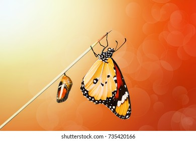 Butterfly and cocoon  - Stock Image