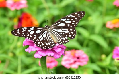 Butterfly collect nectar from flower, butterfly on flower with garden and colorful flower