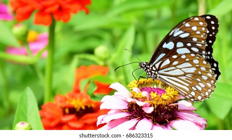 Butterfly collect nectar from flower, butterfly on flower in the garden with colorful and green background for wallpaper, space copy and background