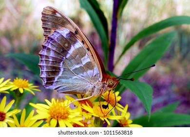 butterfly colorful insect flower