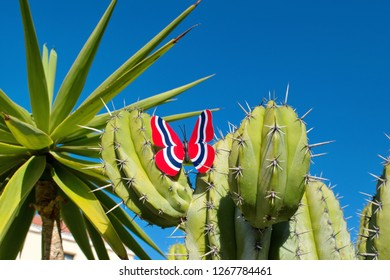 Butterfly with the colors of the national flag of Norway sits on a green cactus against a clean blue sky .  Concept of Norwegian Constitution Day.  Celebrated on May 17.
