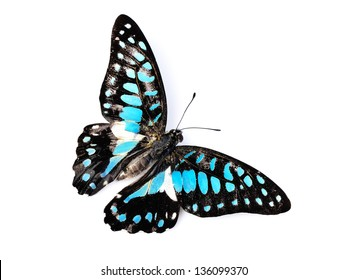 Butterfly (Common Jay) isolated on white background