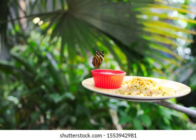 Butterfly in conservatory eating dinner