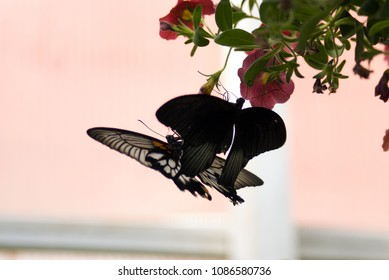 Butterfly Courtship on Bloom