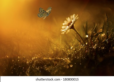 Butterfly and daisy wild flower in sunset