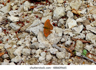 A butterfly with damaged wing sitting on stones