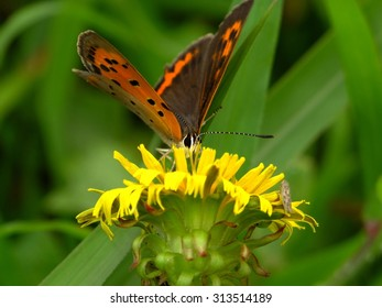 butterfly and dandelion in the misty green #5
