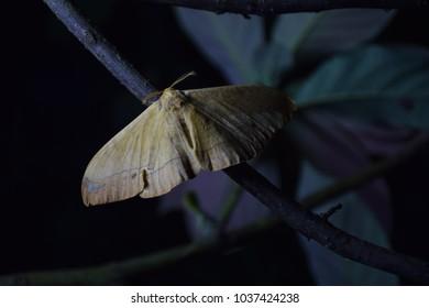 butterfly in dark