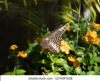 The butterfly effect is the sensitive dependence on initial conditions in which a small change in one state of a deterministic nonlinear system can result in large differences in a later state.