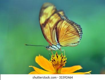 butterfly, feeding costa rica 1