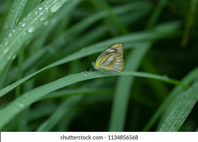 Butterfly feeding on green leaf