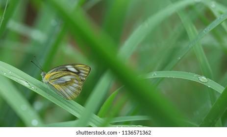 Butterfly feeding on green leaf