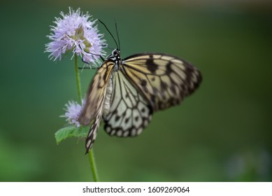 A butterfly feeding on nectar