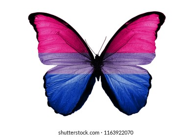 butterfly with flag bisexual on wings