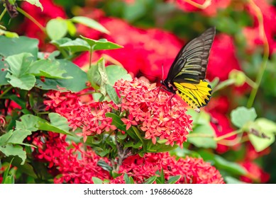The butterfly flew to catch with the flower to use its tentacles to penetrate into the flowers to suck the nectar.