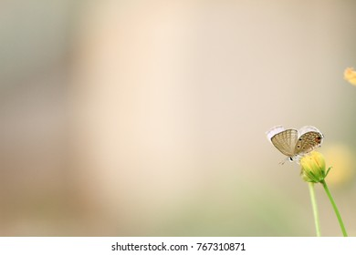 Butterfly with flower and background