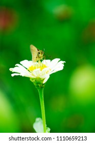 Butterfly and flower blooming in the nature green bokeh backgrounds