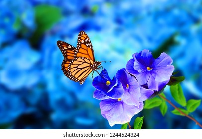 Butterfly Flower Images. Beautiful butterfly on blue flowers..This photo contains a beautiful butterfly with wings sitting on blue colored flowers.a nice cute and latest nature photo of flowers.